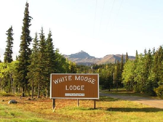 White Moose Lodge: Our sign from the Highway.
