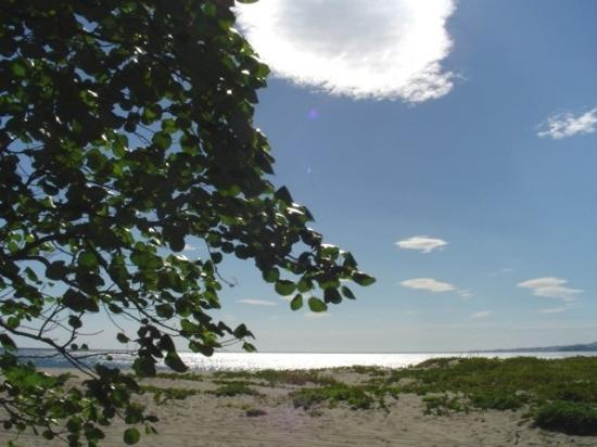 Parador Turistico Icacos: Beach