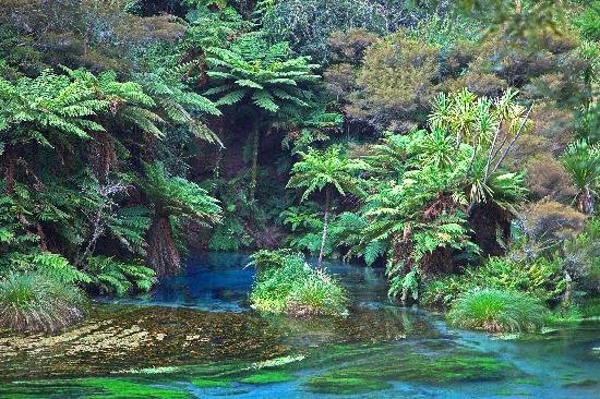 North Island Blue Springs