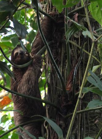 Alby Lodge: Sloth
