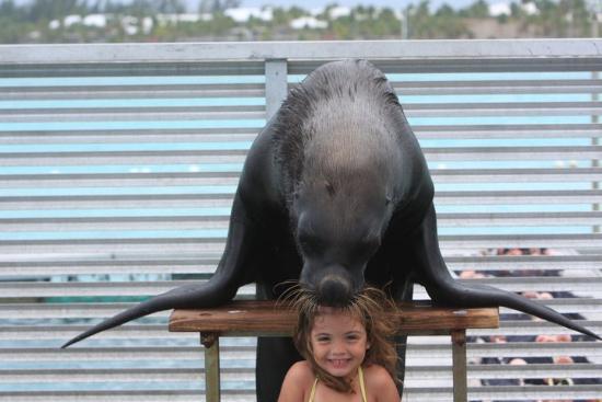 Dolphin Island : Mi hija, feliz con su amigo Kobi