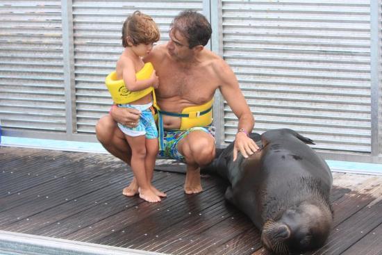 Dolphin Island : Mi marido con mi hijo (2), y Kobi el león marino