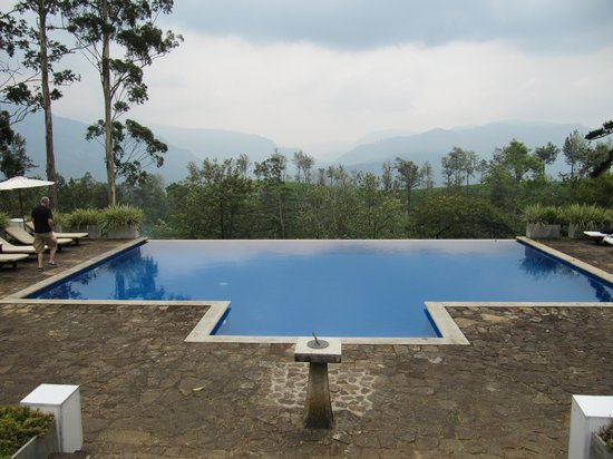 The Lavender House: Infinity pool at Lavender House