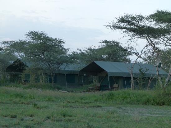 Serengeti Halisi Camp: Wohnzelte