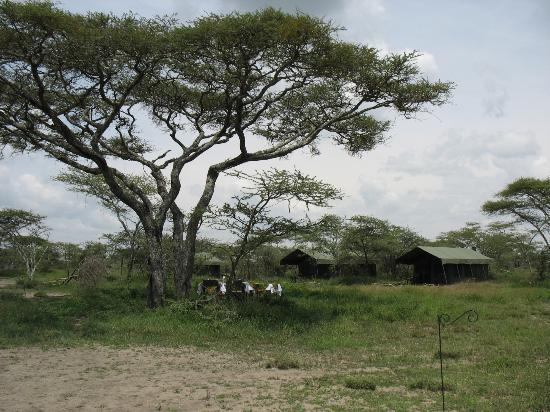 Serengeti Halisi Camp: Das Camp