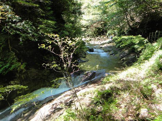 Yamanashi, اليابان: 水の音に癒されます