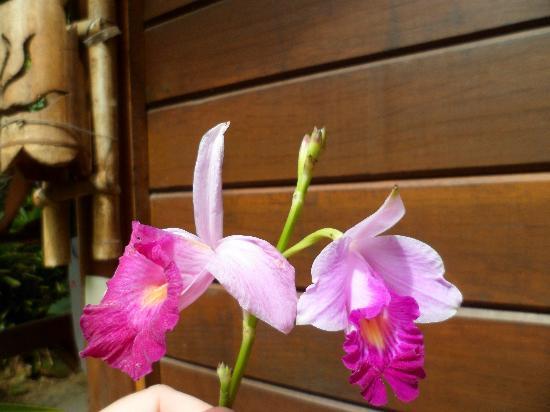 Pousada Tagomago Beach Lodge: Estas flores hay en la pousada,ente toda la vegetación