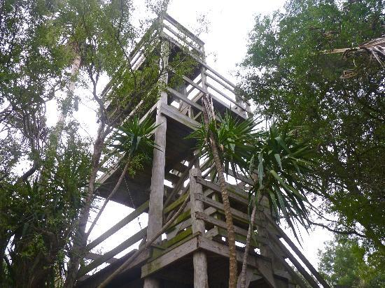 The Inn at Chachalaca Bend: Don't miss the tower for a birdseye view of the area