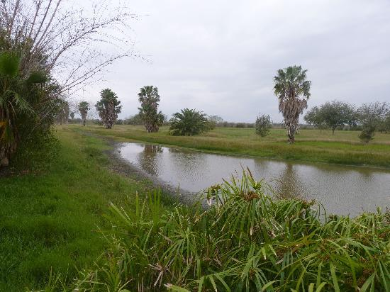 The Inn at Chachalaca Bend: Small wetland out on the prairie savanna