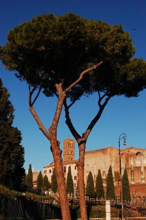 Rome, Italy: Roma