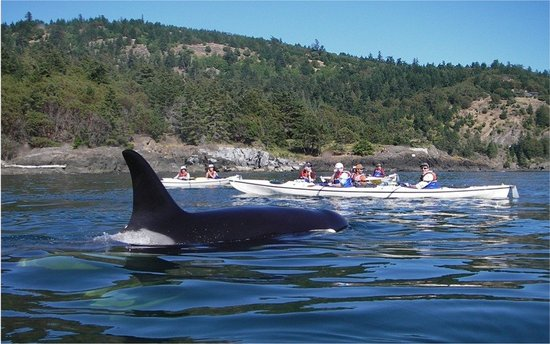 Orca Kayak Tours Seattle