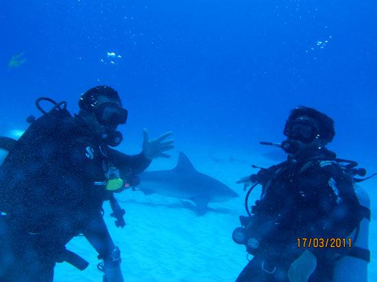 Ramon Zapata Divers