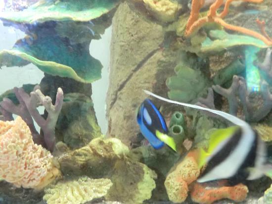 Aquarium n mo picture of acuario mazatlan mazatlan - Aquarium nemo ...