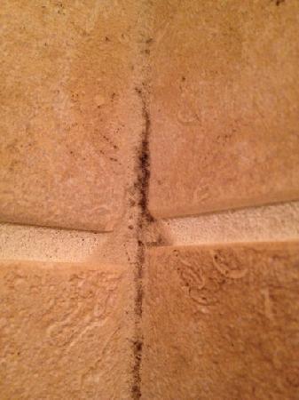 Westin Portland: mold is growing in bathroom