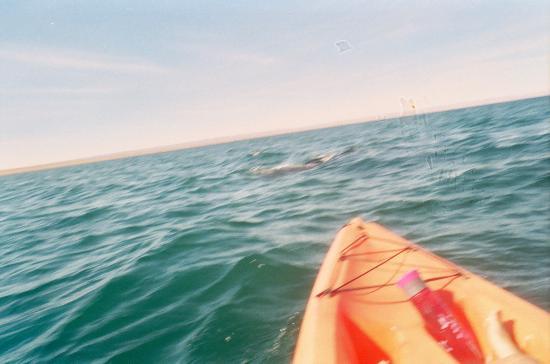 Paraiso Del Mar: Whale shark