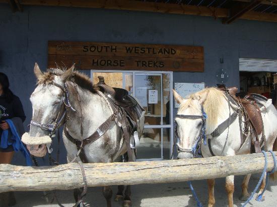 Glacier Country Horses: Lovely Appaloosa Horses