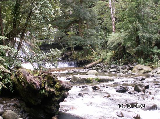 Liffey Falls: Liffey River