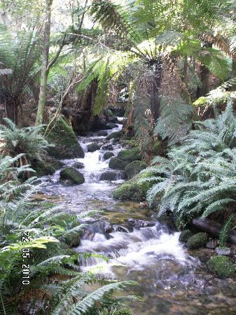 Cuckoo Falls : Tributary of the Great Forester River