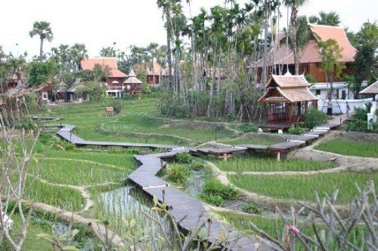 The Dhara Dhevi Chiang Mai: Rice Paddies View
