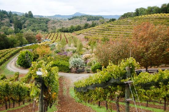 Benziger Family Winery: Lovely property, disappointing wine