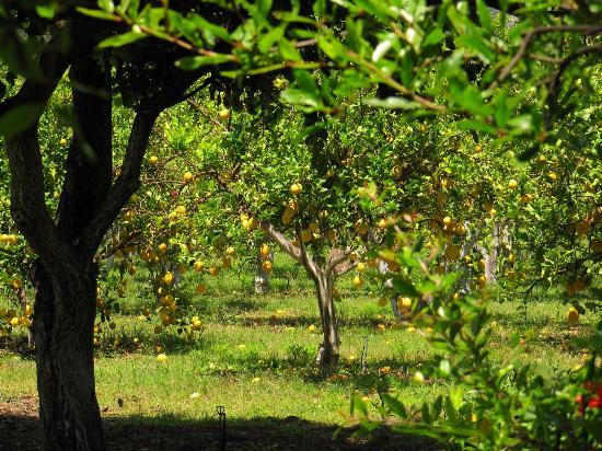Kiyi Pansiyon: Pension Garden