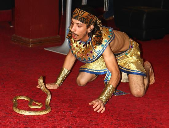 Panorama Naama Heights: snake charming in lounge