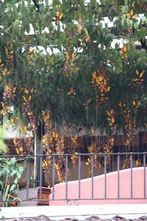 Hotel Las Farolas: orchidées