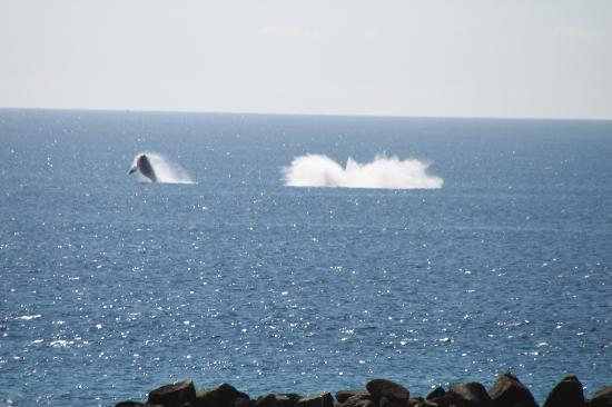 Hilton Los Cabos Beach & Golf Resort: Whales breaching