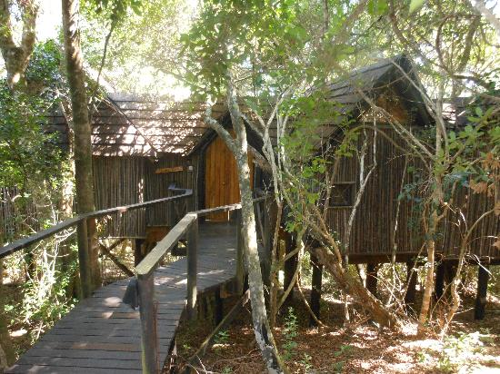 The Phantom Forest Eco-Reserve: our treehouse