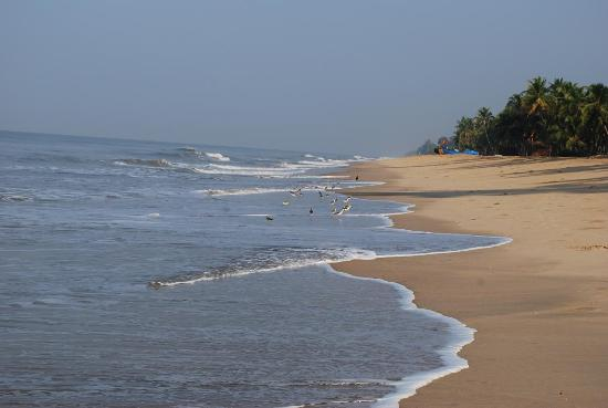 Malabar Ocean Front Resort and Spa: morning beach walk and seaguls