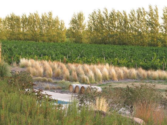 Valle Perdido Wine Resort: view