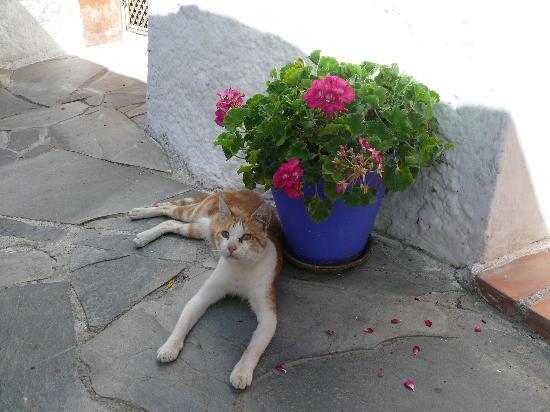 Sierra y Mar: это наше домашнее животное. :-)
