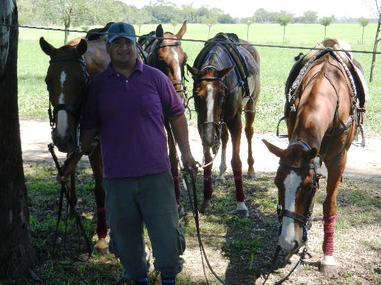 Guapa Polo: The Groom And Horses