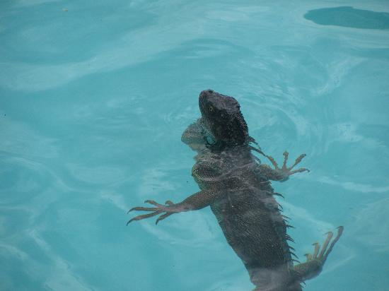 Allegro Papagayo: Someone joined us in the pool....the humans jumped out!!