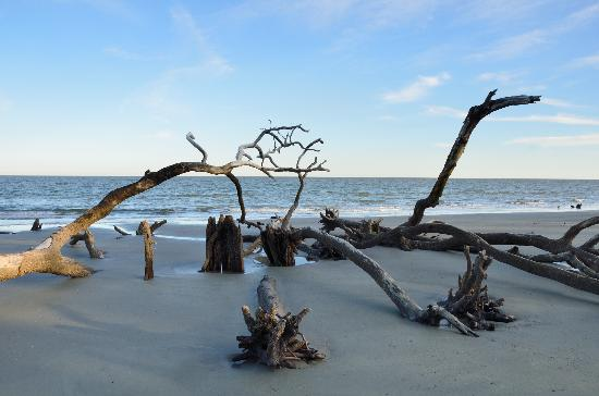 Hunting Island State Park - Picture of Hunting Island State Park ...