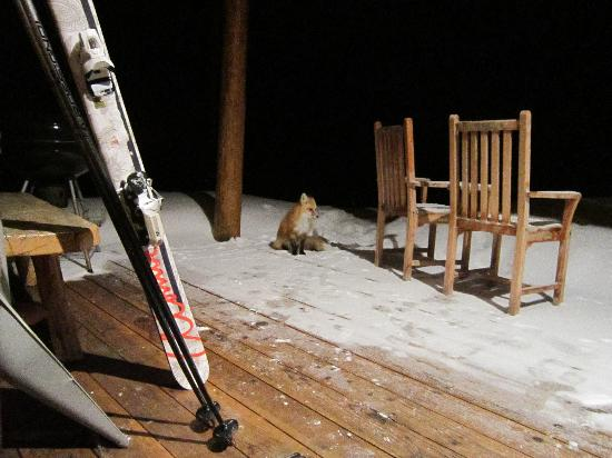 Moonlight Mountain Homes: A foxy friend decided to visit