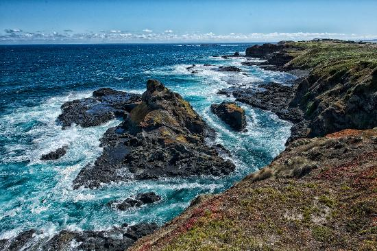 The Nobbies Centre: Seal Rocks