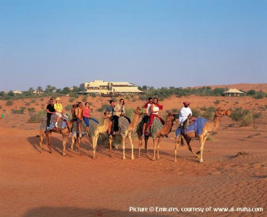 Al Maha, A Luxury Collection Desert Resort & Spa: Camel Riding 1