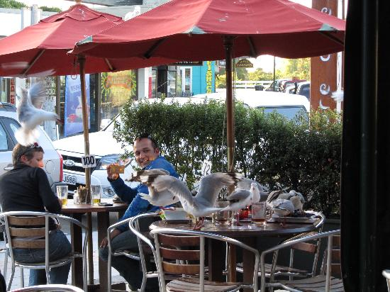 Aromas Cafe: gulls in action