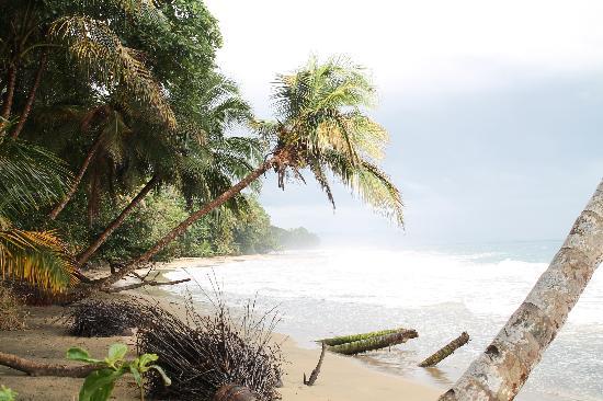 Casa Viva Beach Houses: beach