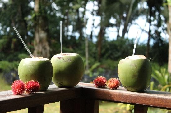 Casa Viva Beach Houses: morning coconuts