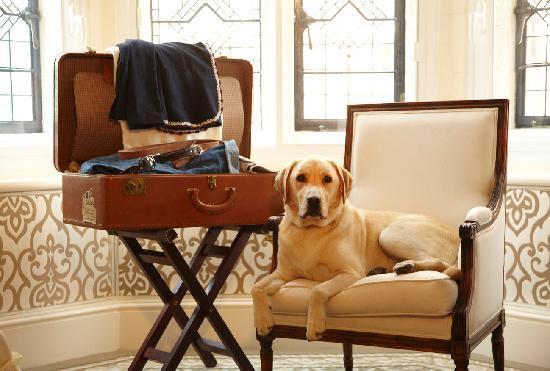 The Milestone Hotel : Pet Friendly