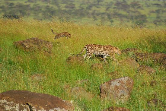 Bettykensafaris: Leopard family