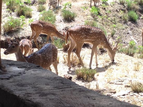 Jungle Hut: More Deer
