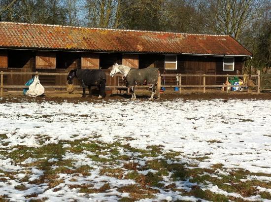Imagine Blofield Heath: Horse paddock next-door