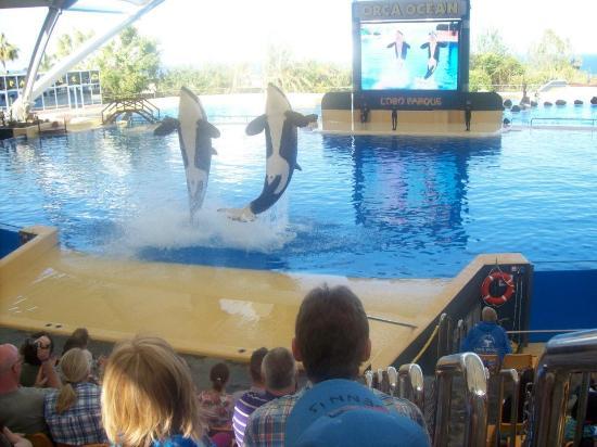ClubHotel Riu Buena Vista : Loro Parque Whale Show