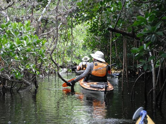 Everglades Kayak Company : Kayaking a mangrove tunnel