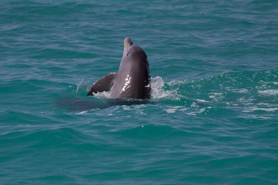 Sian Ka'an, Mexico: delfino 1