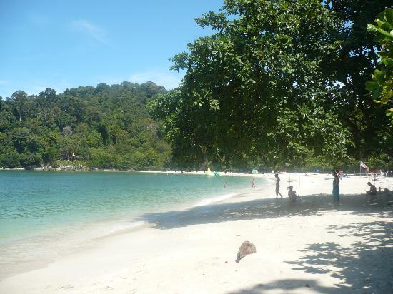 Nipah Bay Villa : coral bay beach