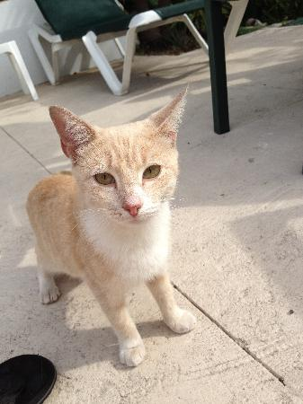 Bay View Suites Paradise Island : Little cat at the hotel